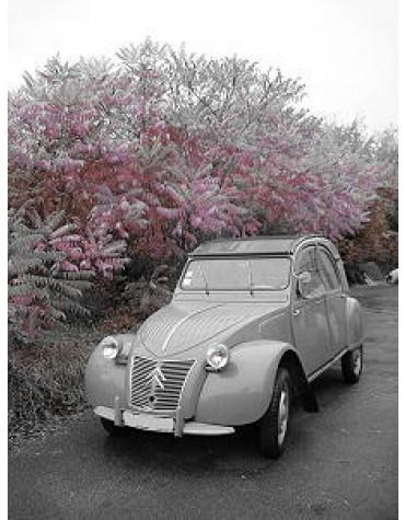 2 CV AZLP 1959 gris souris